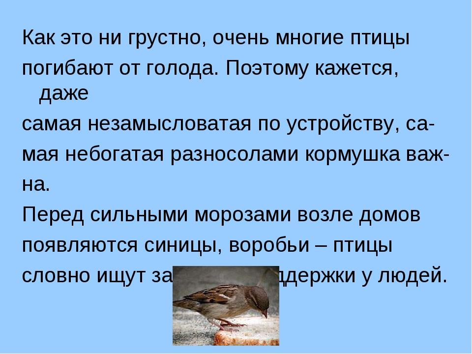 Как это ни грустно, очень многие птицы погибают от голода. Поэтому кажется, д...