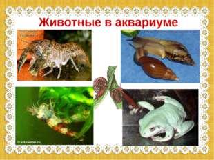 Животные в аквариуме