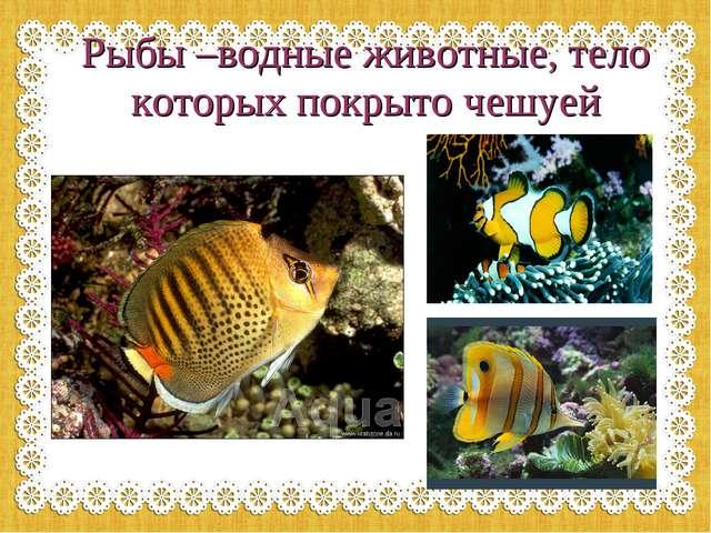 Рыбы –водные животные, тело которых покрыто чешуей