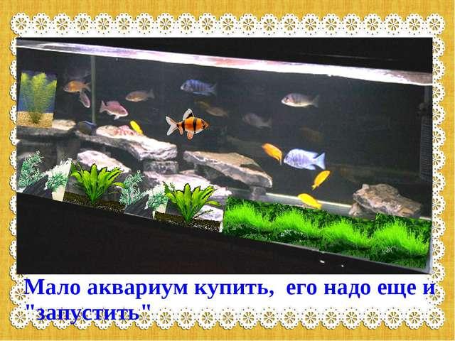 """Мало аквариум купить, его надо еще и """"запустить"""""""