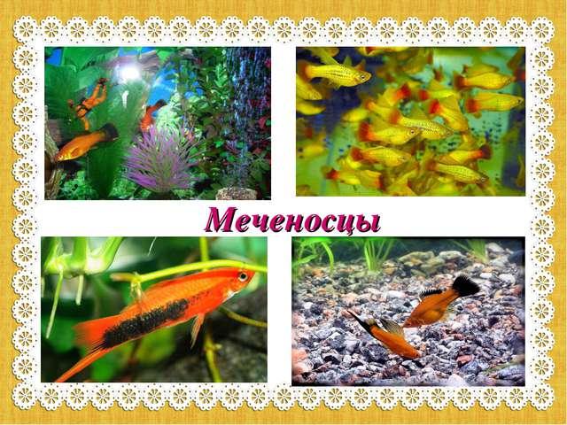 Меченосцы