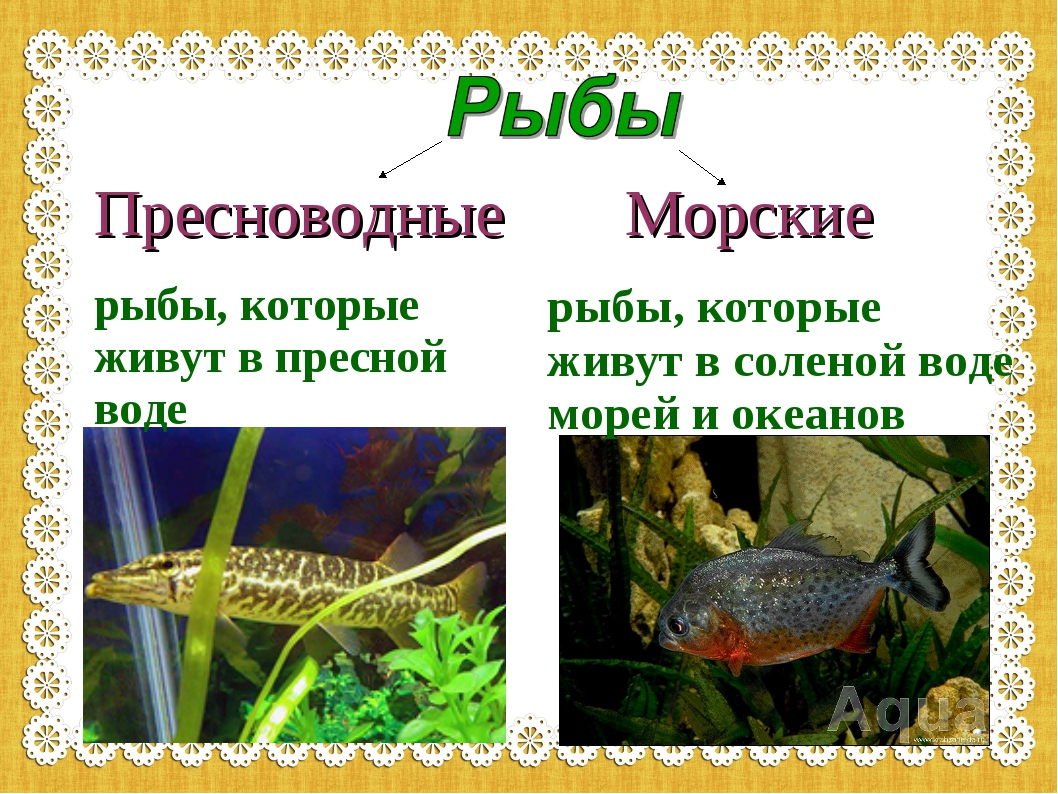 Пресноводные рыбы, которые живут в пресной воде Морские рыбы, которые живут в...