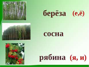 берёза сосна рябина (е,ё) (я, и)