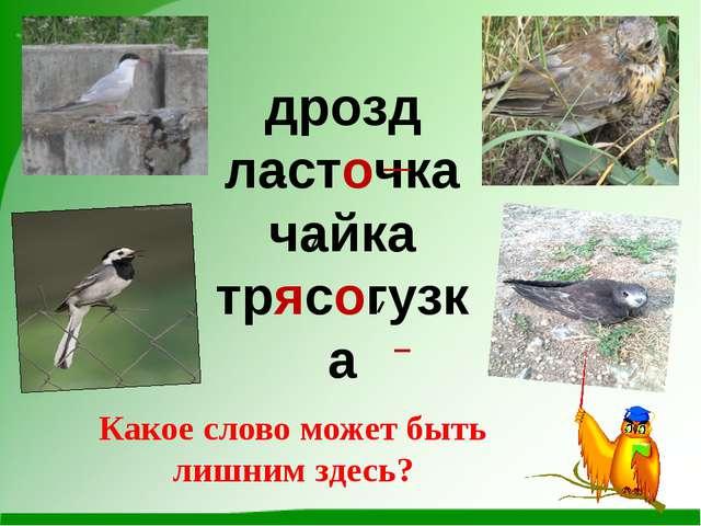 дрозд ласточка чайка трясогузка Какое слово может быть лишним здесь?