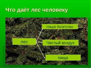 Что даёт лес человеку лес Наше богатство Чистый воздух пища