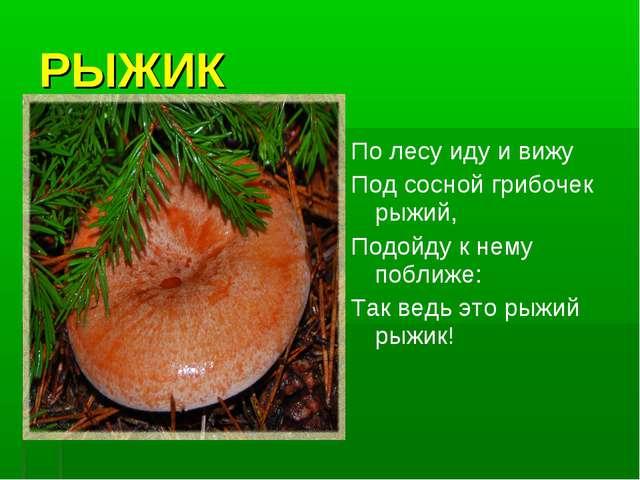 РЫЖИК По лесу иду и вижу Под сосной грибочек рыжий, Подойду к нему поближе: Т...