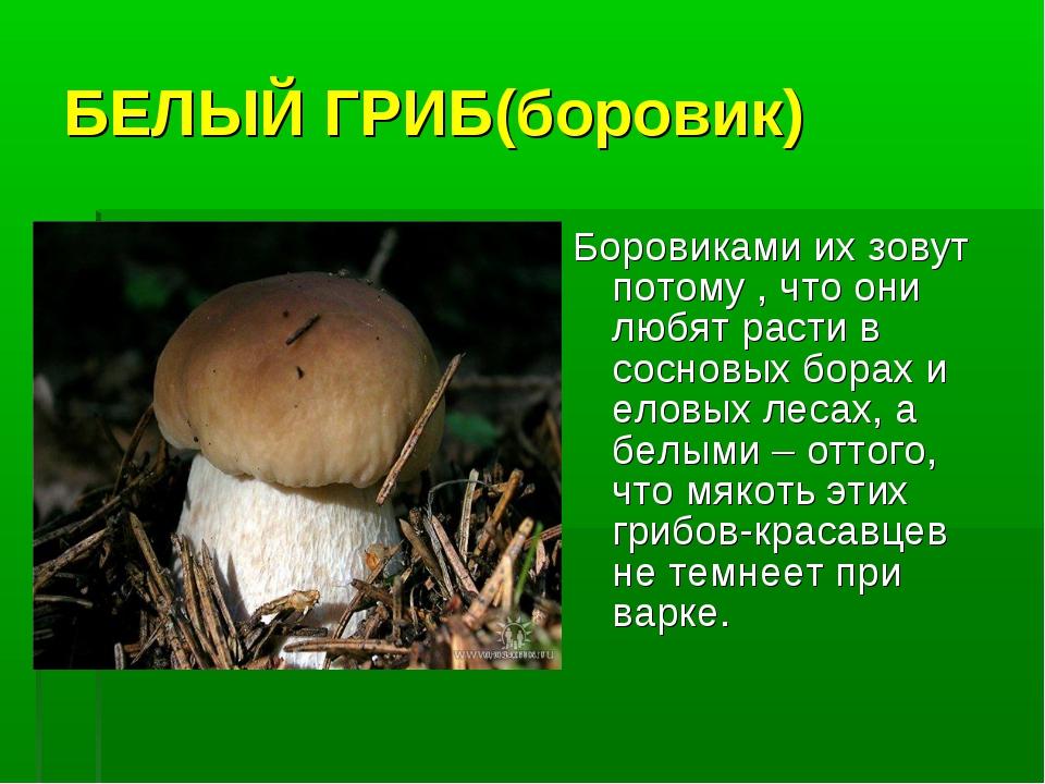 скрывая любые разновидности белого гриба фото и описание которые