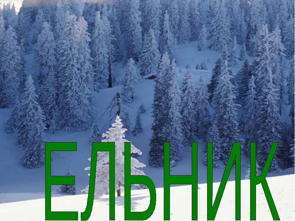 В ельнике