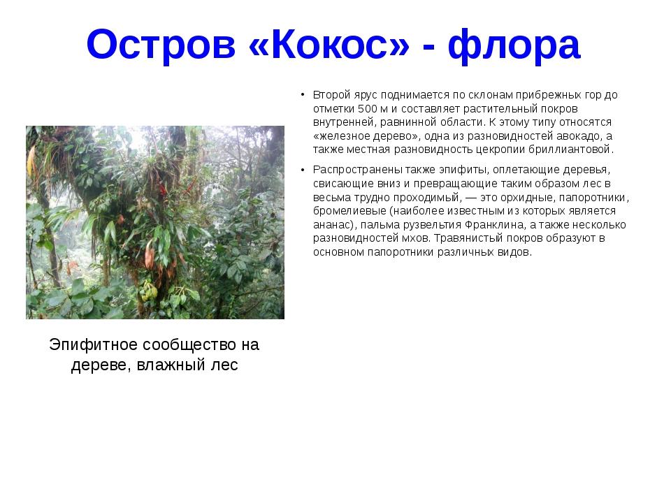 Остров «Кокос» - флора Второй ярус поднимается по склонам прибрежных гор до о...