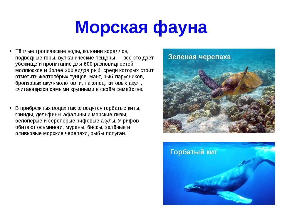 Морская фауна Тёплые тропические воды, колонии кораллов, подводные горы, вулк...