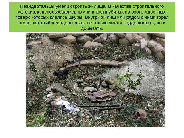 Неандертальцы умели строить жилища. В качестве строительного материала исполь...