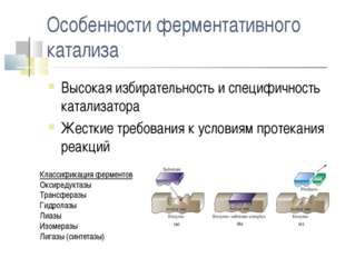 Особенности ферментативного катализа Высокая избирательность и специфичность