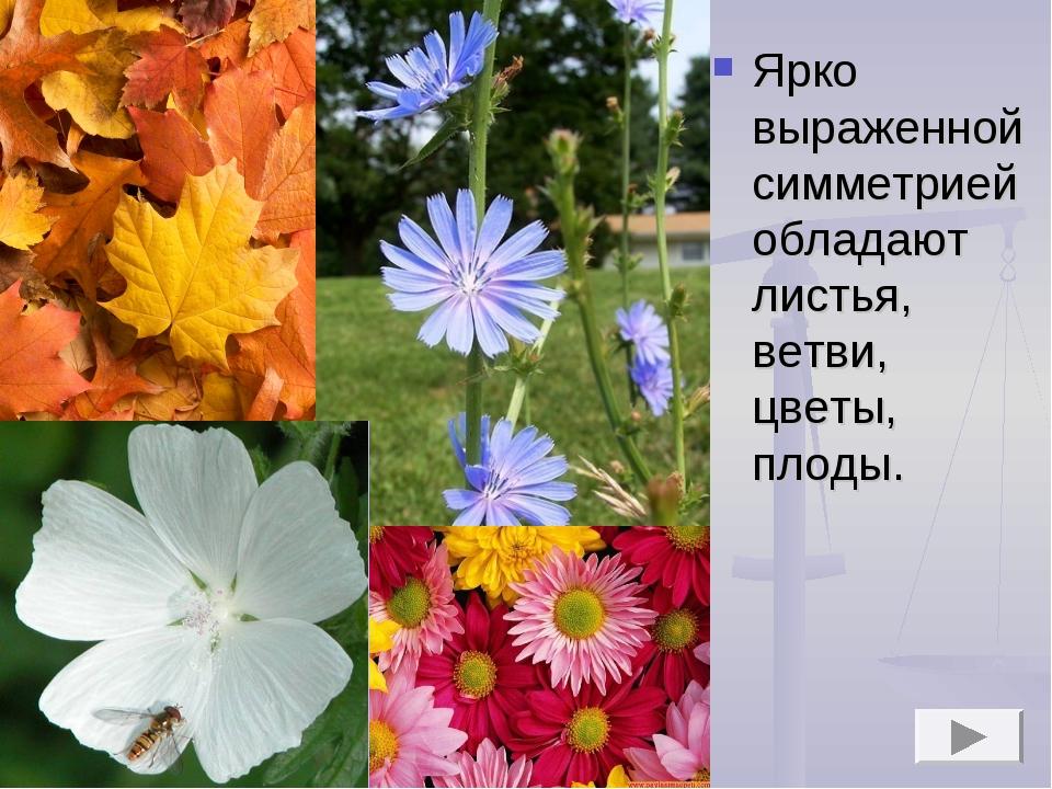 Ярко выраженной симметрией обладают листья, ветви, цветы, плоды.