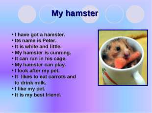 My hamster I have got a hamster. Its name is Peter. It is white and little. M