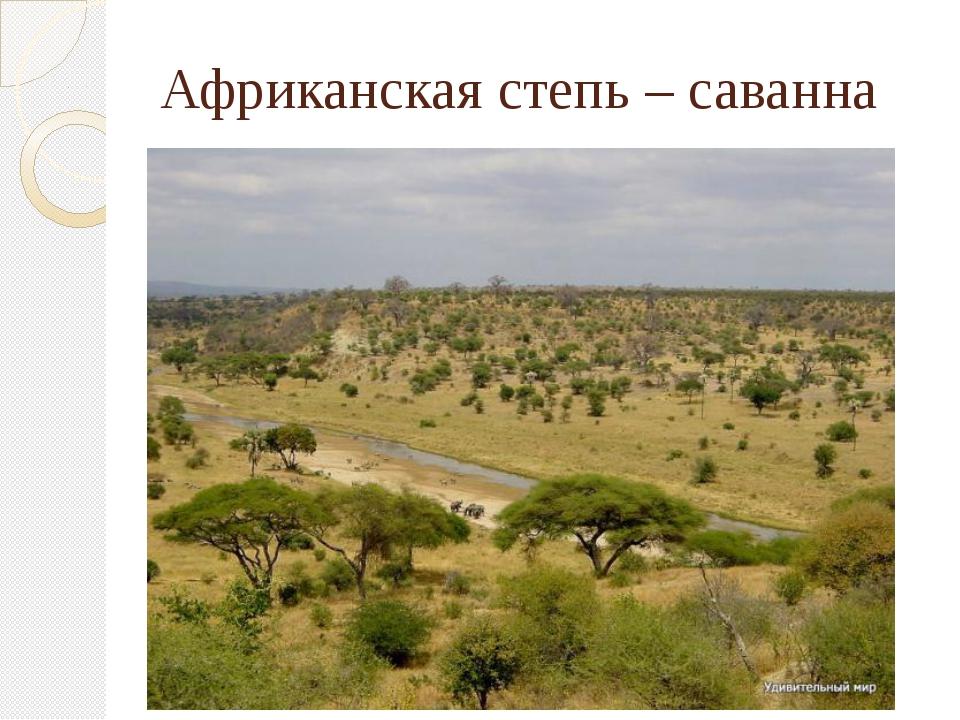 Африканская степь – саванна