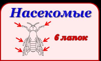 Эталон_насекомые