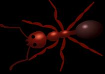 http://www.clker.com/cliparts/a/0/f/d/119543861675546820aurium_Ant.svg.hi.png