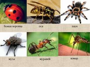 божья коровка оса паук муха муравей комар