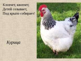 Клохчет, квохчет, Детей созывает, Под крыло собирает! Курица