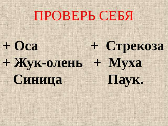 ПРОВЕРЬ СЕБЯ + Оса + Стрекоза + Жук-олень + Муха Синица Паук.