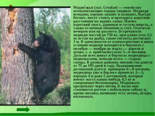 Медве́жьи (лат. Ursidae) — семейство млекопитающих отряда хищных. Медведи