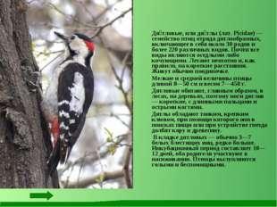 Дя́тловые, или дя́тлы (лат. Picidae) — семейство птиц отряда дятлообразных,