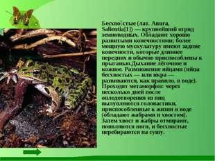 Бесхво́стые (лат. Anura, Salientia[1]) — крупнейший отряд земноводных. Облад