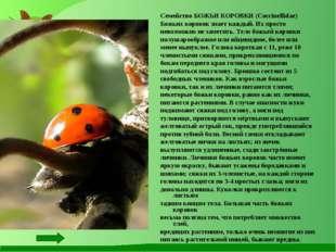 Семейство БОЖЬИ КОРОВКИ (Coccinellidae) Божьих коровок знает каждый. Их прост