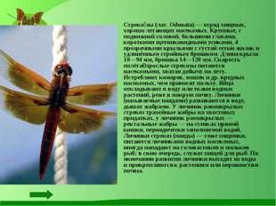 Стреко́зы (лат. Odonata) — отряд хищных, хорошо летающих насекомых. Крупные,