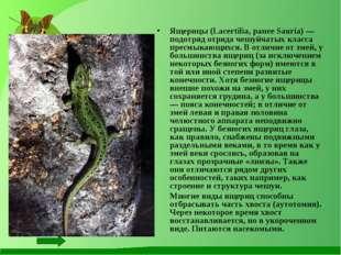 Ящерицы (Lacertilia, ранее Sauria) — подотряд отряда чешуйчатых класса пресмы