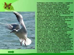 Ча́йковые, или ча́йки (лат. Laridae) — семейство птиц, обитаюших на морских