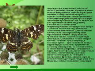 Чешуекры́лые, или ба́бочки, мотыльки́, мо́ли (Lepidóptera Linnaeus, отряд на