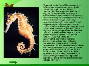 Морской конёк (лат. Hippocampus) — небольшая морская костистая рыба семейств