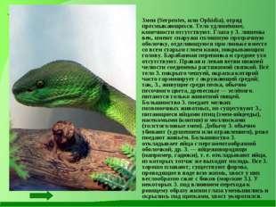 Змеи (Serpentes, или Ophidia), отряд пресмыкающихся. Тело удлинённое, конечн