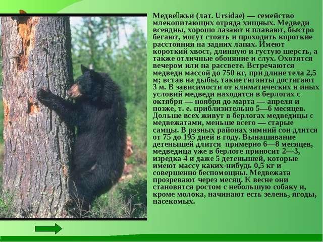 Медве́жьи (лат. Ursidae) — семейство млекопитающих отряда хищных. Медведи...