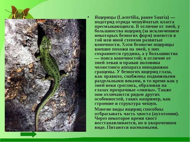 Ящерицы (Lacertilia, ранее Sauria) — подотряд отряда чешуйчатых класса пресмы...