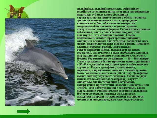 Дельфи́ны, дельфи́новые (лат. Delphinidae) — семейство млекопитающих из отря...
