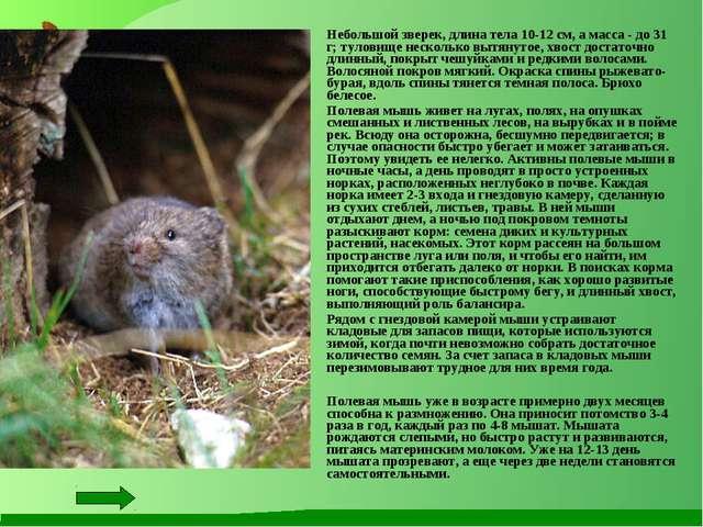 Небольшой зверек, длина тела 10-12 см, а масса - до 31 г; туловище несколько...