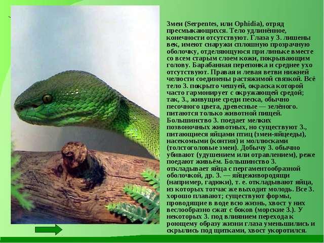 Змеи (Serpentes, или Ophidia), отряд пресмыкающихся. Тело удлинённое, конечн...