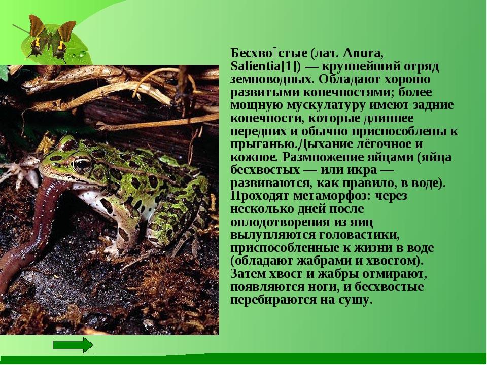 Бесхво́стые (лат. Anura, Salientia[1]) — крупнейший отряд земноводных. Облад...
