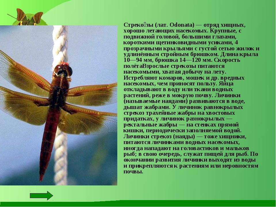 Стреко́зы (лат. Odonata) — отряд хищных, хорошо летающих насекомых. Крупные,...