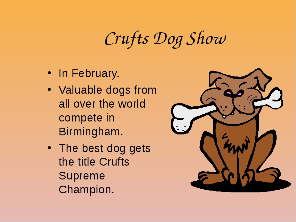 Crufts Dog Show In February. Valuable dogs from all over the world compete in...