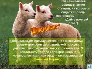 Как называются овцеводческие станции, на которых содержат овец-мериносов? (Да