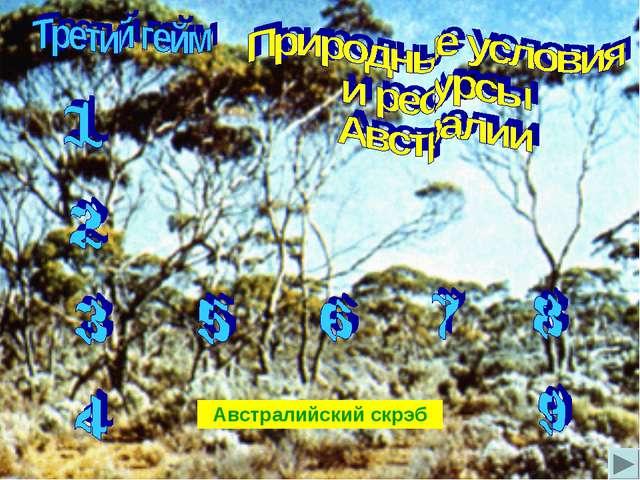 Австралийский скрэб