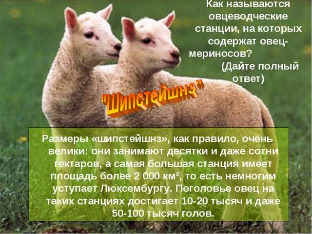 Как называются овцеводческие станции, на которых содержат овец-мериносов? (Да...