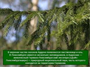 До сих пор около 1/3 территории Люксембурга покрывают леса (на равнинах листв