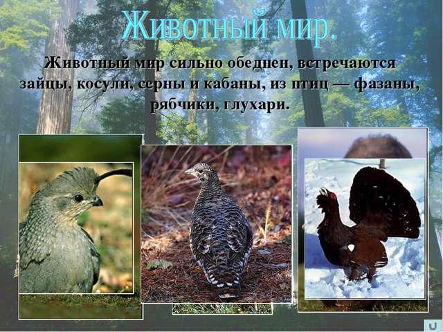 Животный мир сильно обеднен, встречаются зайцы, косули, серны и кабаны, из пт...
