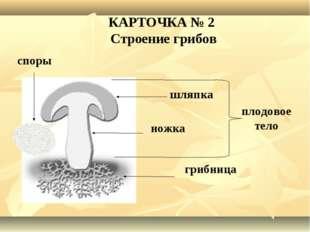 плодовое тело шляпка ножка грибница КАРТОЧКА № 2 Строение грибов споры