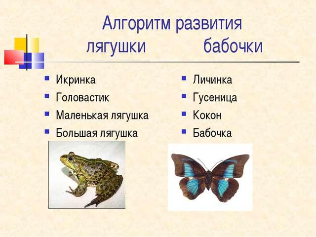 Алгоритм развития лягушки бабочки Икринка Головастик Маленькая лягушка Больша...