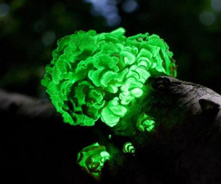 ТОР-15 самых необычных грибов